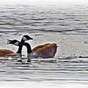 Goose Crossing Art Print