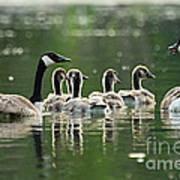 Goose Family Art Print