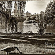 Goose In Central Park Nyc Art Print