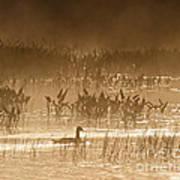 Goose Of The Mist Art Print