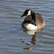 Goose Reflecting  Art Print
