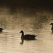 Goose Silhouette Art Print
