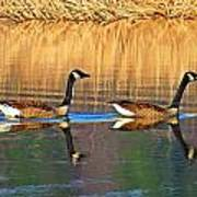 Goose Talk Too Art Print
