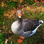 Goosey Goose Art Print