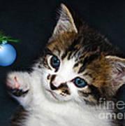 Gorgeous Christmas Kitten Art Print