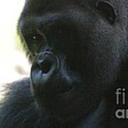 Gorilla-10 Art Print