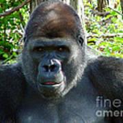 Gorilla Headshot Art Print