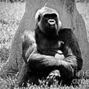 Gorilla In Solitude Art Print
