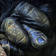 Gorilla's Hand Art Print