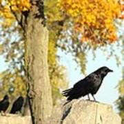 Three Ravens On A Gothic Graveyard Day Art Print