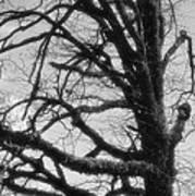 Gothic Oak Art Print