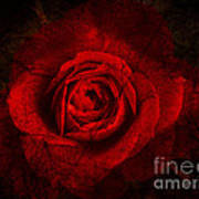 Gothic Red Rose Art Print