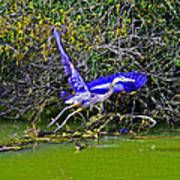 Gr8 Heron Flight Art Print