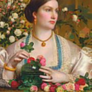 Grace Rose Art Print