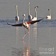 Graceful Flamingo Dance Art Print