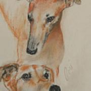 Graciously Greyhound Art Print
