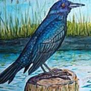 Grackle By The Water Art Print