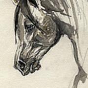 Grafik Polish Arabian Horse Ink Drawing Art Print