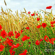Grain And Poppy Field Art Print