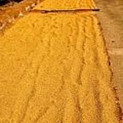 Grain Drying Art Print