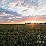 Grain Field Art Print