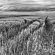 Grain Field Tracks Art Print