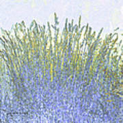 Grains Art Print