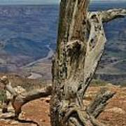 Grand Canyon And Dead Tree 2  Art Print