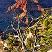 Grand Canyon Branches Art Print