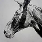 Grand Canyon Mule Art Print