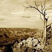 Grand Canyon Sepia Art Print by T C Brown