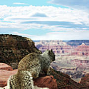 Grand Canyon Squirrel Art Print