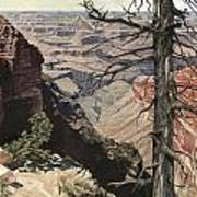Grand Canyon View Weathered Tree Right Side  Art Print