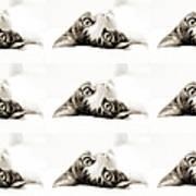 Grand Kitty Cuteness Bw 9 Art Print