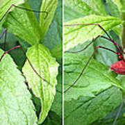 Granddaddy Spider In 3d Stereo Art Print
