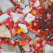 Granite Rocks Among Maple Leaves Art Print