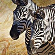 Grant's Zebras_b1 Art Print