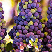 Grape Bunches Wide Art Print