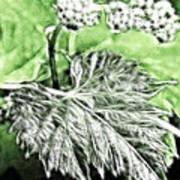 Grape Vine Leaf Art Print