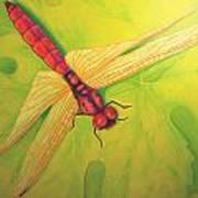 Grapeleaf Dragonfly Art Print