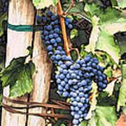 Grapes 1 Art Print