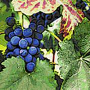 Grapes 3 Art Print