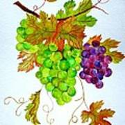 Grapes Art Print by Elena Mahoney