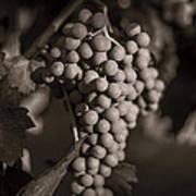 Grapes In Grey 2 Art Print