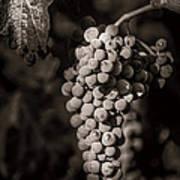 Grapes In Grey 4 Art Print