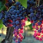 Grapes With Bokeh Art Print