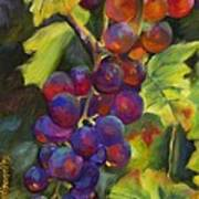 Grapevine Art Print by Chris Brandley