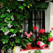 Grapevines And Geraniums Around A Window Art Print
