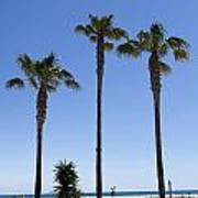 Graphic Image Of Palm Trees Blue Sky At Seaside Art Print