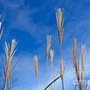 Grass Against A Blue Sky Art Print